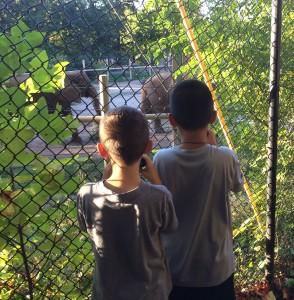 K. & D. with Seneca Park Zoo elephants