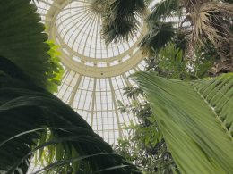 The view from beneath the dome of a greenhouse.